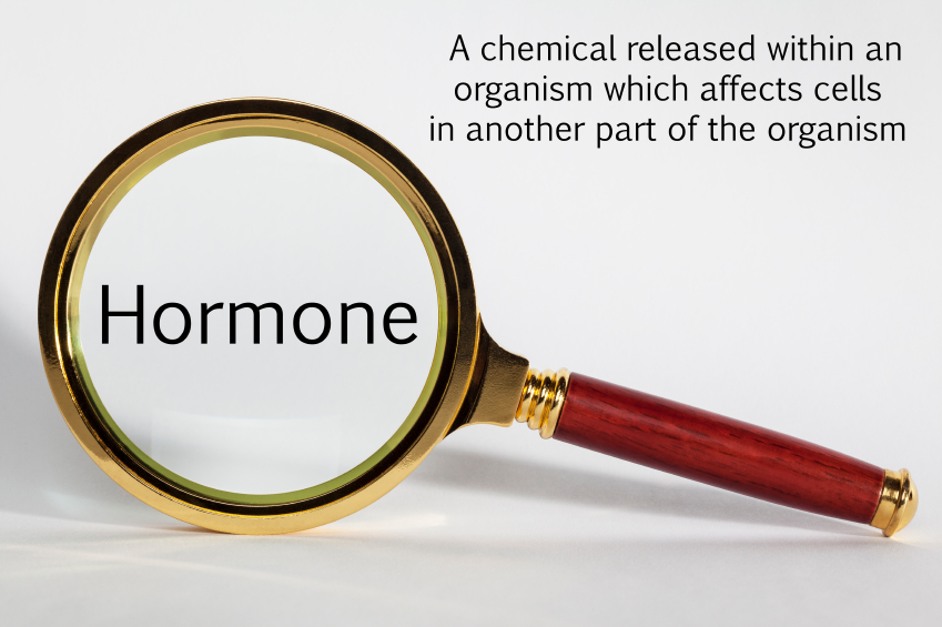 Hormone Concept - looking at Hormone through a magnifying glass.